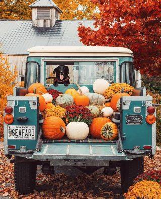 Alice, non rattristarti per l'arrivo dell'autunno Se ti metti a testa in giù le foglie invece di cadere dai rami sembrano spiccare il volo. - AlbertHofman72, Twitter - #novembre nel #cuore #november 🍁🍂🍁🍂 Ph fall_world . #autunno #pumpkins #fall #vibes